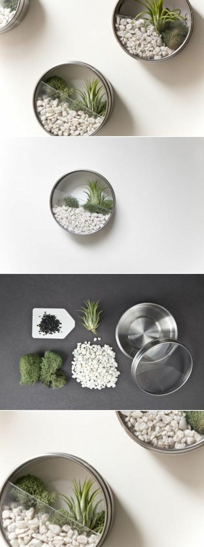 idée comment créer un mini terrarium facile, bricolage avec canette, recycler une boîte de conserve aluminium