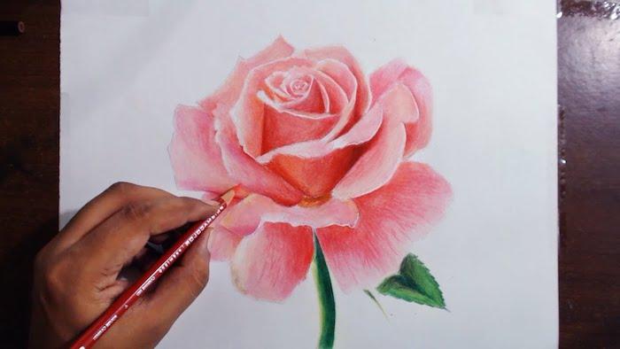 Dessin rose en rose avec pétales 3d effet, dessin de rose fleur dessin couleur paysage fleurie