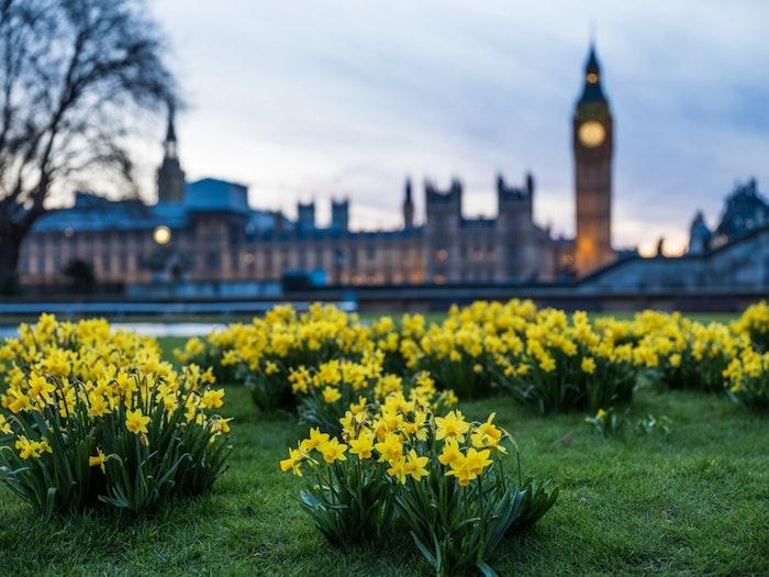 Londres beau paysage urbain, fond d'écran paysage, beauté contemporaine Big Ben et fleurs de printemps