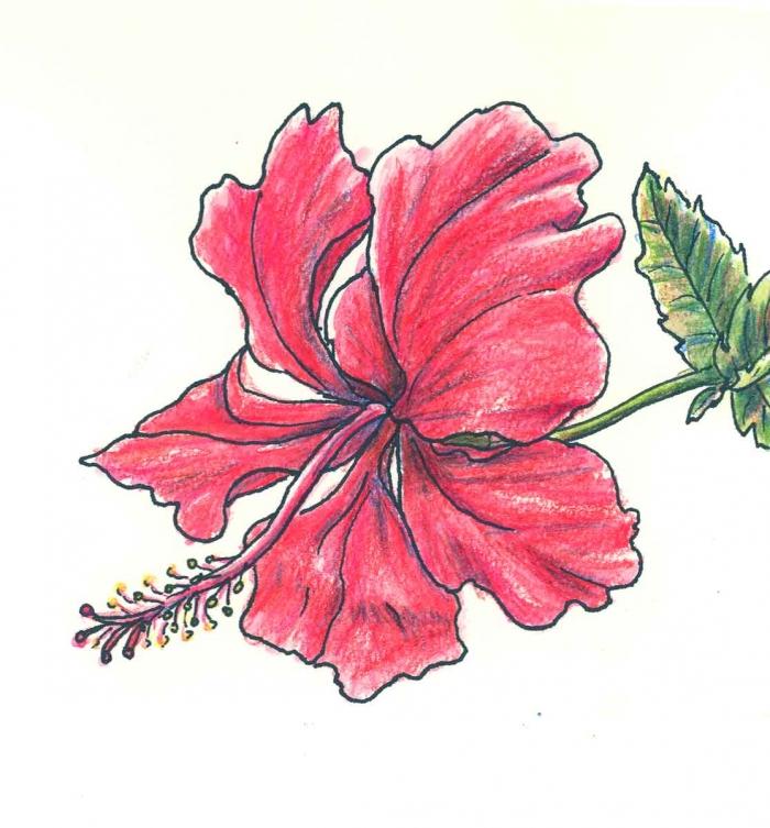 Rouge fleur vert feuilles, apprendre a dessiner facilement dessin tatouage fleur