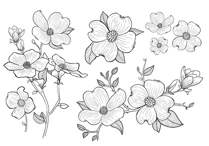 Les plus belles fleurs noir et blanc dessin, different angles de meme fleur dessin facile a reproduire par etape idée de dessin à reproduire