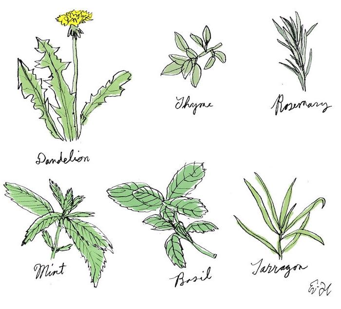 Champetre pissenlit, fleur de printemps le plus beau dessin du monde, cool idée différent herbes dessin