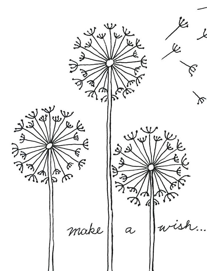 Dessiner un pissenlit faire une voeux idée dessin fleur etape par etape