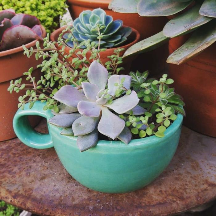 tasses et pots de jardin, succulentes plantées en pots colorés, aménagement jardin
