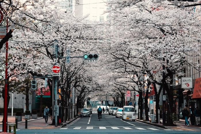 Printemps cerises à Tokyo fond d'écran paysage, les plus belles villes du monde, photographie urbaine