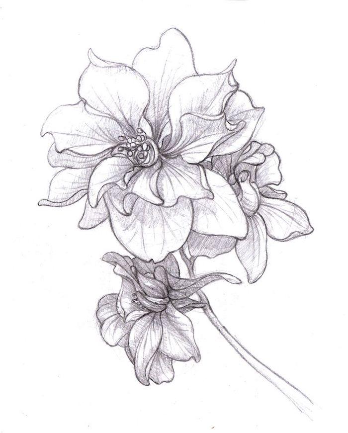 Fleur ouvert dessin au crayon noir, fleur dessin couleur dessin etape par etape art simplement expliqué