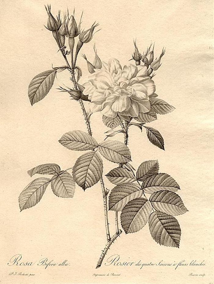 Vintage dessin fleur printemps dessin etape par etape belles fleurs idée tatouage