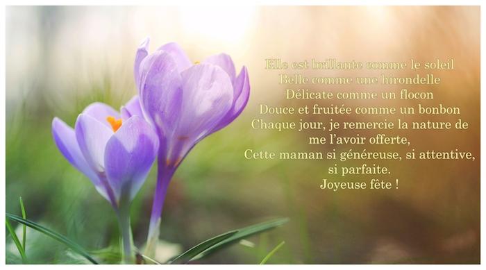 Fleurs de printemps crocus violet en pleine nature, photographie des rayons de soleil qui touchent les fleurs de printemps et poème pour sa mère pour lui dire joyeuse fete maman