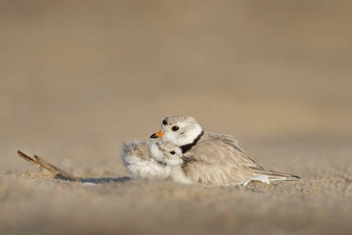 Oiseaux amour, la plus belle photo de fleur bonne fete des meres, image fête des mères, deux oiseaux en calin