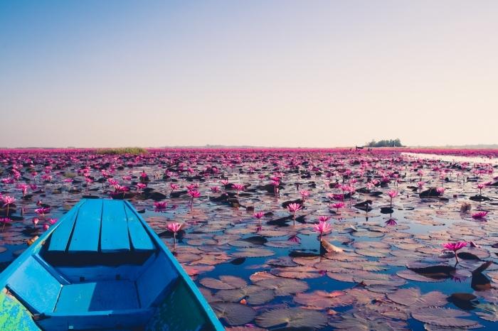 paysage paradisiaque pris d'un lac aux nénuphars roses, idée fond d écran magnifique pour ordinateur ou notebook