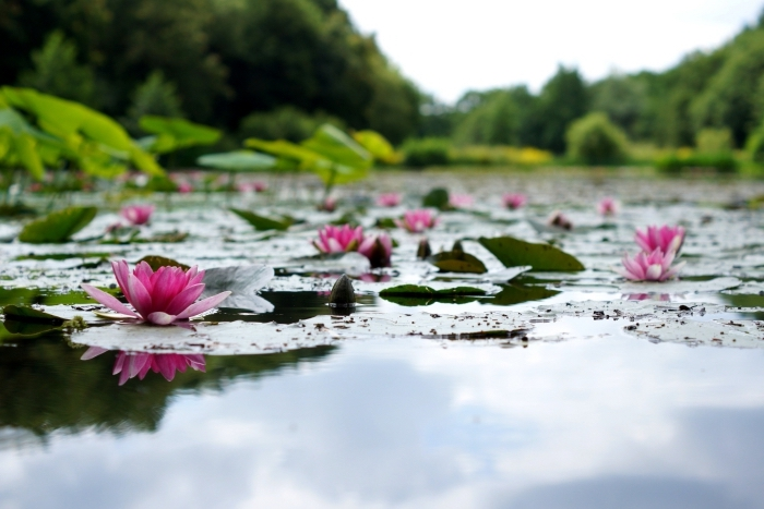 photo de la nature vierge dans un lac au printemps, idée fond ecran printemps, exemple de fond d écran zen