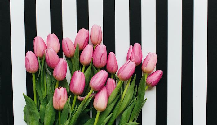 Tulipes roses, fleurs de printemps carte fête des mères, idee fete des meres, bouquet de fleurs printanières au fond noir et blanc