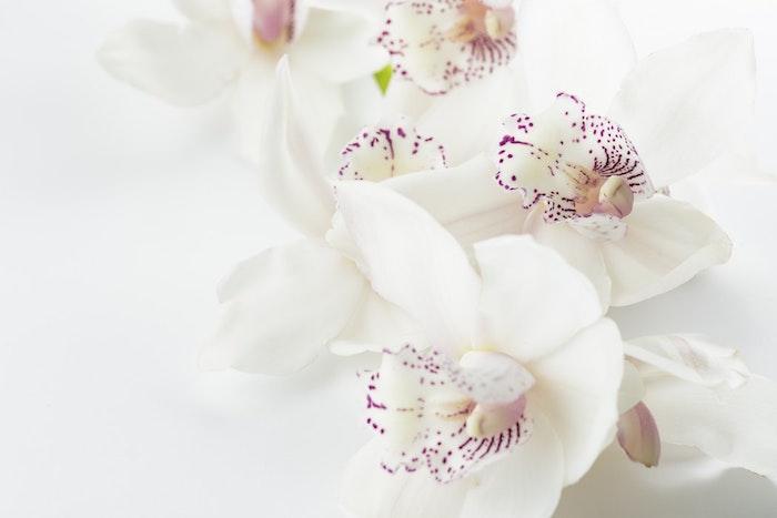 Orchidées blanches fond d'écran de beauté nature, image bonne fete maman, bonne fete des meres, carte fete des meres