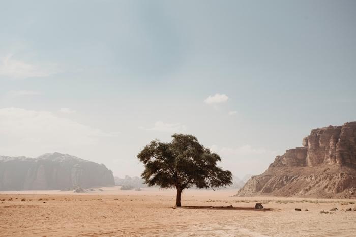 idée fon decran avec paysage, photo d'un arbre dans le désert, paysage paradisiaque de la nature vierge dans le désert