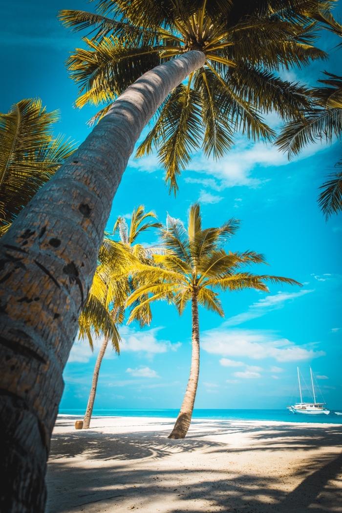 idée paysage exotique comme fond d'écran iphone, exemple fond d écran gratuit avec ciel bleu et palmiers sur la plage blanc