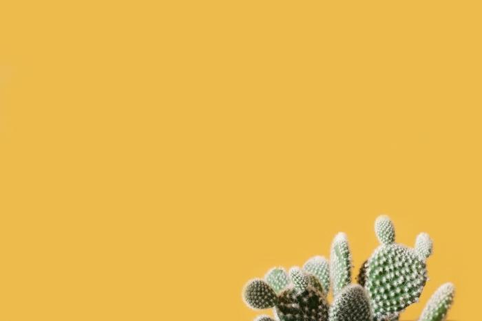 wallpaper ordinateur sur le thème des cactus, customiser son desktop avec fon decran monocrome et petite plante dans le coin