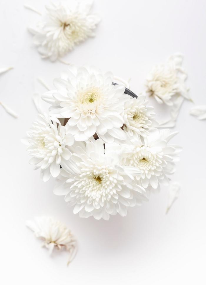 photo douceur avec fleurs blanches, joli fond d écran pour téléphone portable, idée wallpaper pour le printemps