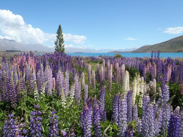 prendre une photo de champs de fleurs au printemps, changer la photo de son écran, idée fond d écran gratuit pour ordinateur