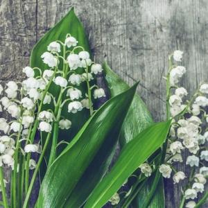 Parfum muguet à offrir à l'occasion du premier mai et autres cadeaux surprises très originaux