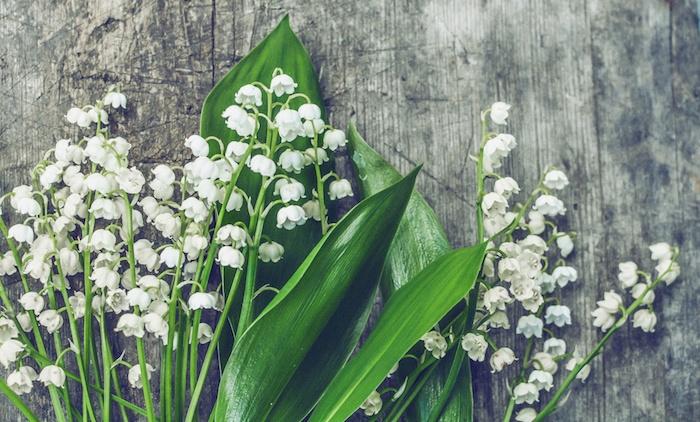 1er mai muguet porte bonheur image de muguet sur fond en bois, idée fleur de printemps pour la journée internationale du travail