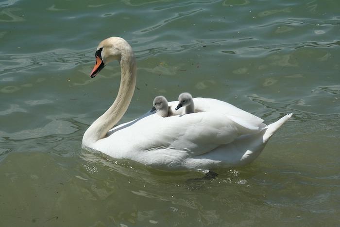 Adorable photo de signe avec ses petits, bonne fete maman, image fête des mères, quelle carte choisir pour sa mère
