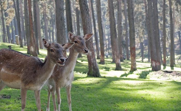 Foret soleil deux animaux, bonne fête des mères, cadeau fete des meres, carte adorable animale