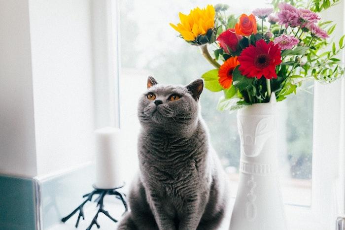 Chat devant vase avec fleurs de printemps, fete des meres cadeau, bonne fete des meres, belle photo pour fond d'écran
