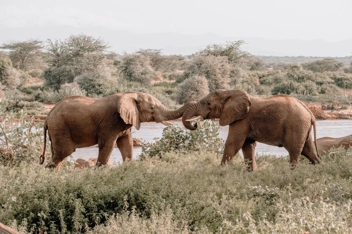 fon decran pour pc, idée photo de la nature avec couple éléphants, exemple wallpaper pour ordinateur avec paysage naturel
