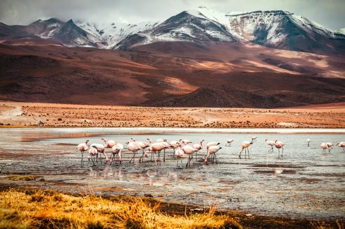 fond d écran gratuit, photo de la nature sauvage, idée fon decran magnifique avec vue sur les sommets montagnes