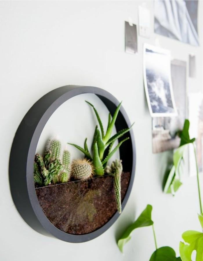 terrarium mural, succulentes plantées au mur gris, photos monochromes, mur de photos