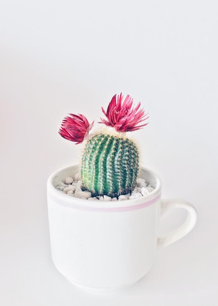 comment faire une photo cool avec objet minimaliste, exemple de fond ecran smartphone avec un mini cactus