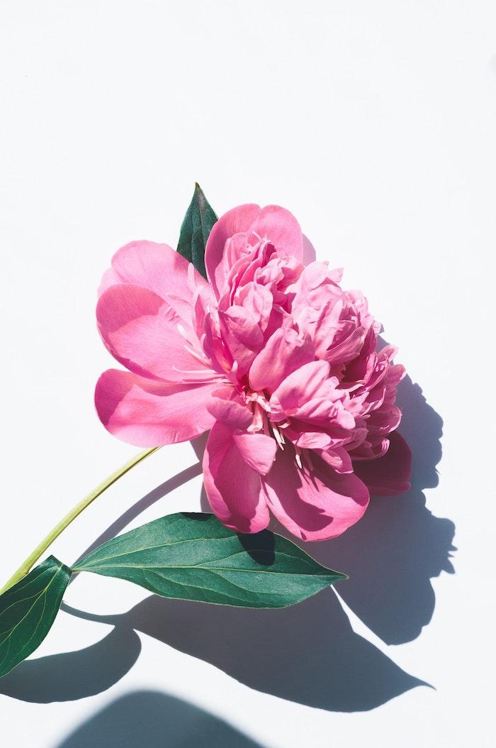 Pivoine photo fleur d'été et de la beauté, bonne fete maman, envoyer message à maman, image qui donne de sourire