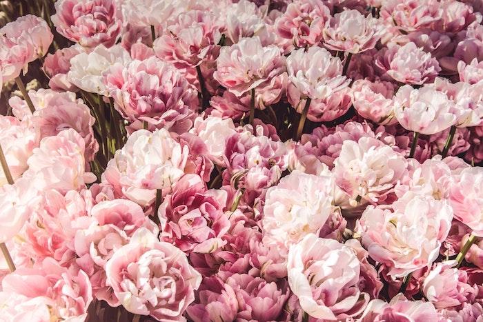 Pivoines dans un grand jardin plein de fleurs, bonne fete des meres, images fête des mères, image bonne fete