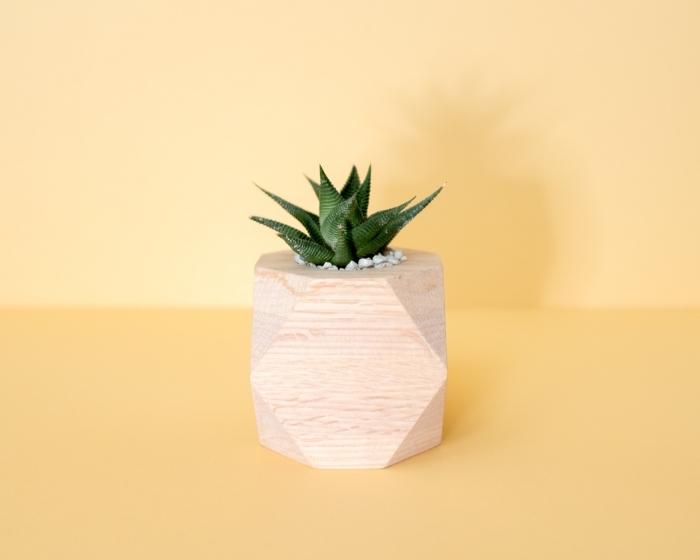 comment prendre des photos d'objets en avant plan, idée fond d écran gratuit pour ordinateur en jaune avec plante