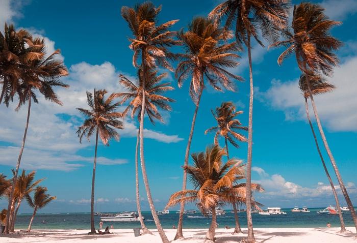 idée fond ecran ete avec palmier et plage, exemple wallpaper pour ordinateur avec paysage exotique, prendre de jolies photos