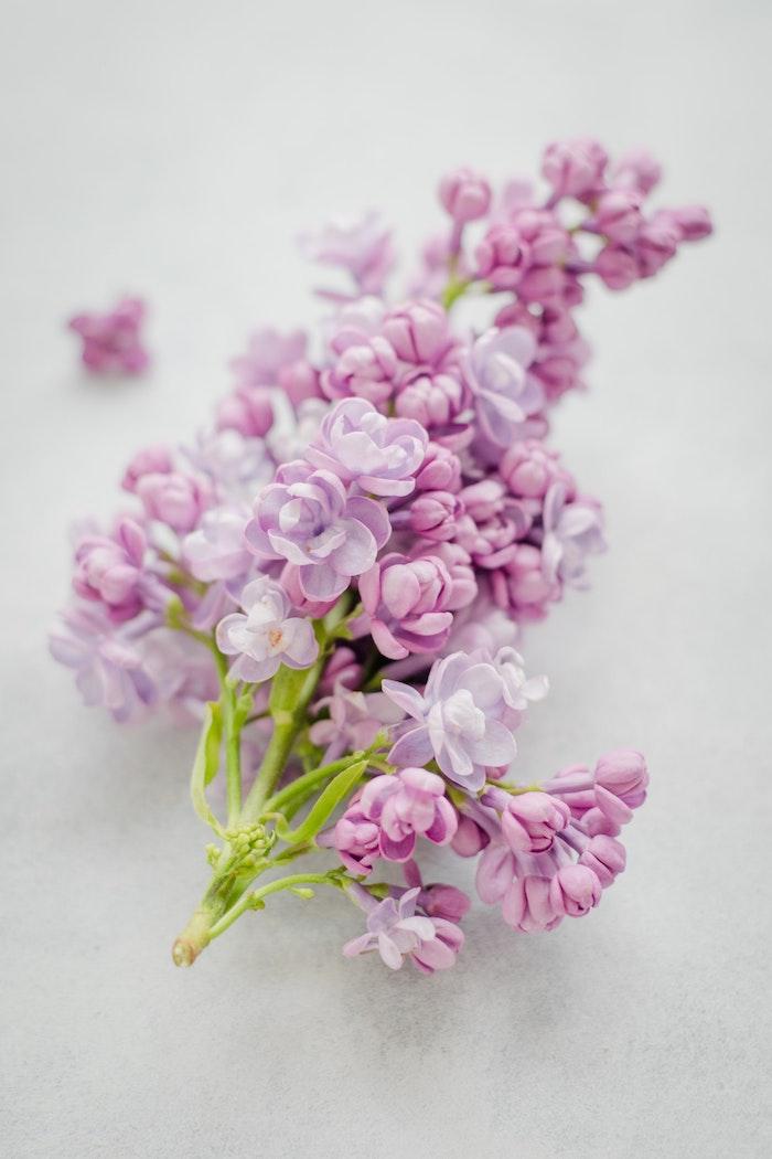 Fleur printemps photo fete des meres et texte pour la fete des mere, image fete des meres