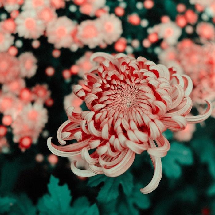 Chouette image de fleur, jardin fleuri, image pour la fete des mere, image fête des mères