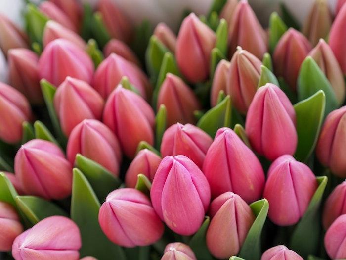 Bouquet de fleurs tulipes roses, cadeau fete des meres, image fête des mères, carte de voeux à envoyer, belle photo de fleurs