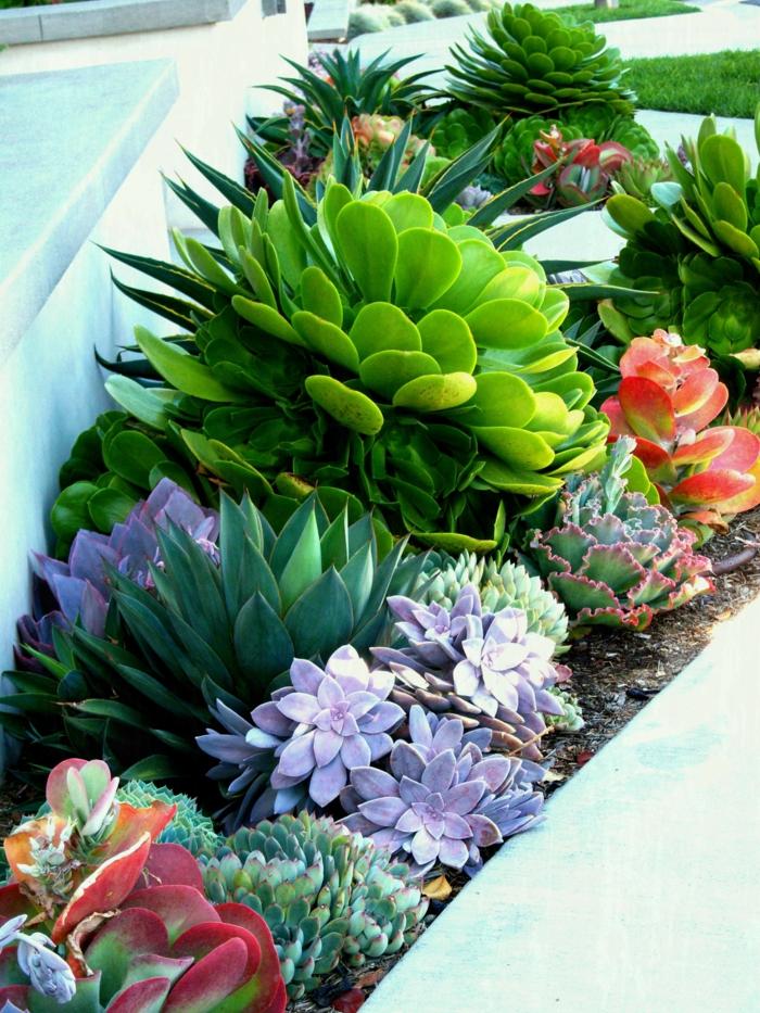 plantes grasses différentes, plante grasse a fleur, jardin contemporain, grandes rosettes splendides