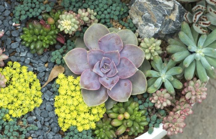 jardin miniature de succulentes, mini plante grasse, grand pot avec arrangement de plantes