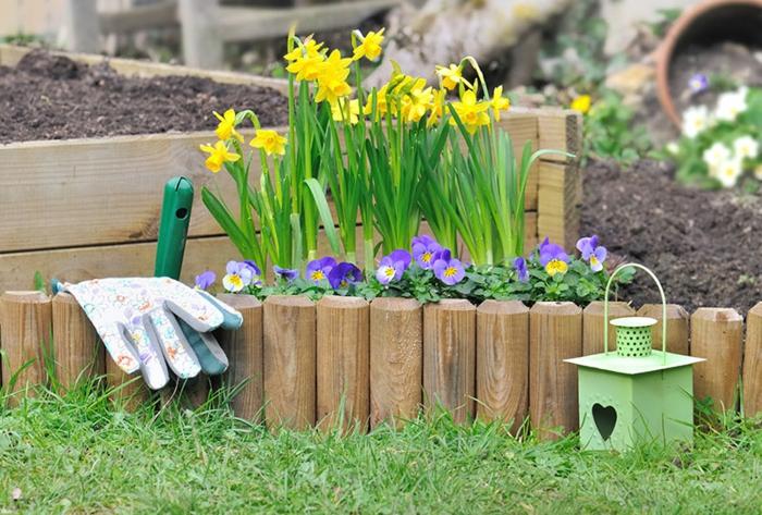 bordure de jardin en bois, parterre rempli de sol, pelouse verte, violettes, lanterne de jardin vert menthe, parterre de jonquilles et de violettes
