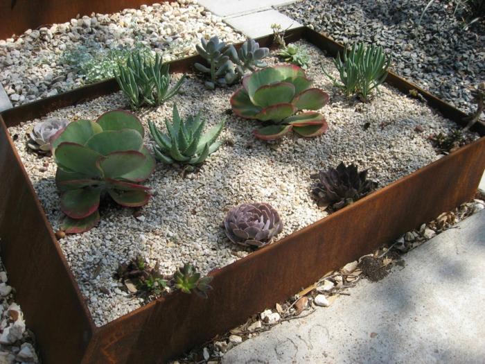petit parterre de succulentes, cailloux, bordure en métal rouillé, aménagement de jardin paysager