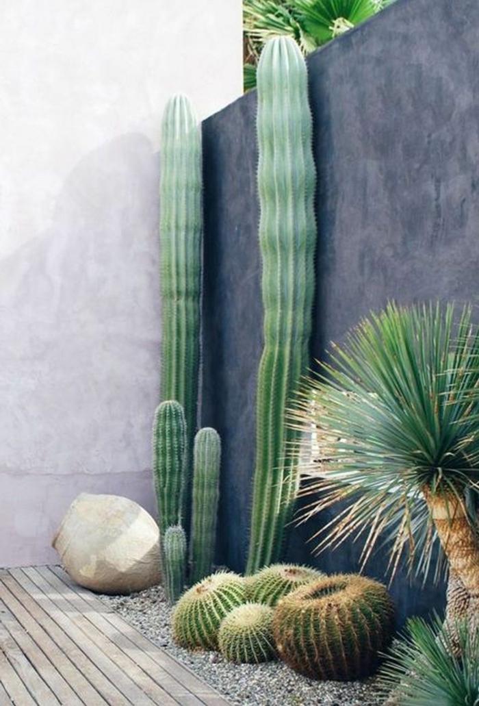 cactus géants près d'un mur moderne, cactus boule, gravier décoratif, pierre