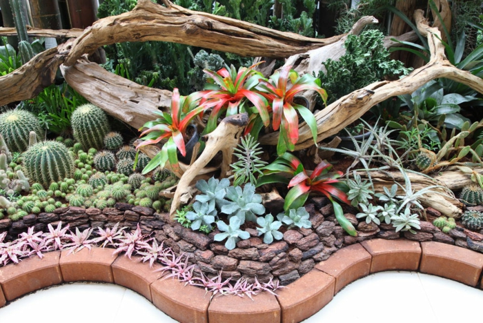 plante cactus, parterre ondulante, plantes grasses d'extérieur, bois flotté, plantes grasses en bordure