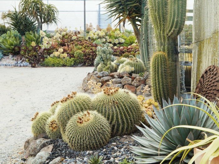 cactus boule, cactée géante, pierres et gravier décoratif, grand jardin esprit désert