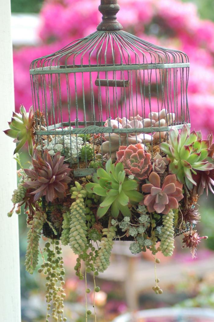 cage d'oiseau remplie de succulentes, plante grasse retombante, arrangement avec cage vintage