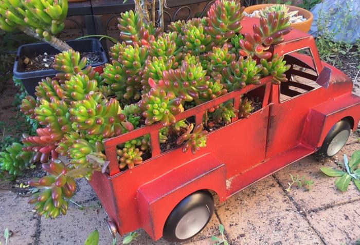 plantes grasses, arrangement original, camion rouge jouet d'enfant, plantes grasses d'intérieur et d'extérieur