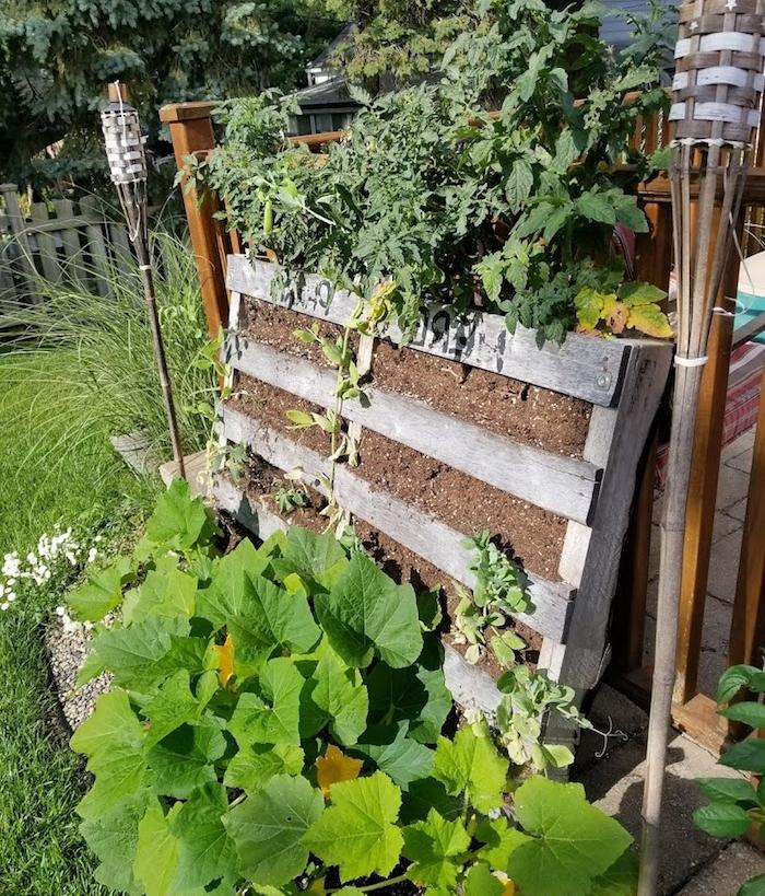 exemple de potager vertical original avec des légumes plantées, comment cultiver tomates et courgettes