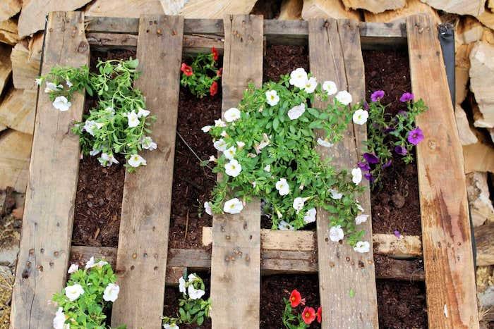 fleurs plantées dans les interstices d une palette de bois dans terreau pour fleurs, idée de bricolage original avec palette de bois