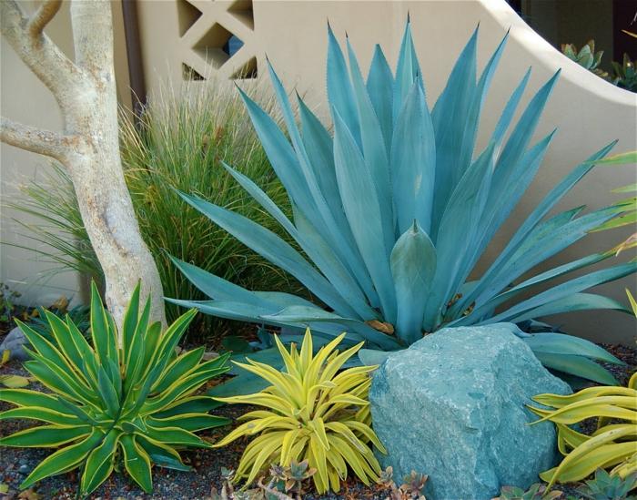 succulentes et pierres, plantes e rocaille dans un jardin, bois florté, cloture beige